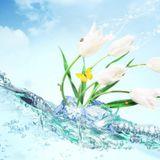 Andrew Shepard: Spring Awakening 2014