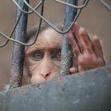 MonkeyTimeRadioHour_17-Oct-2012