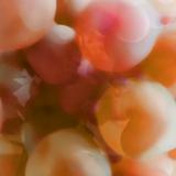 Orange Grapes