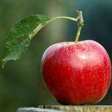 Kirschroterapfelzirkus