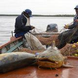 2016-07-06│Pescadores contra las exportaciones de pescados de río │Carlos Milocco- As. Pesc. Sta. Fe