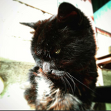 Alley_Cat_05.08.2018.