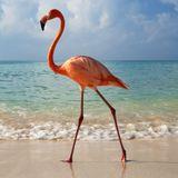 TRAVISWILD's Animal Kingdom Radio 046 - Flamingo (Best of 2015 - Hamptons Special)