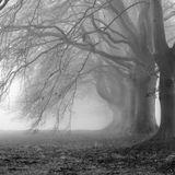 A Little Darkness - Donna Cuore & Wono