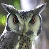Owl hardstyle