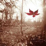 Cánh rừng của những tổ chim vuông