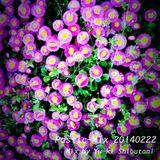 Plastic-Mix 20140222