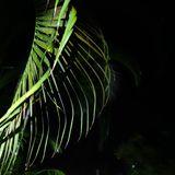 Jungle Tekno Euphoria (Original Back in the Day Vinyl Mix)