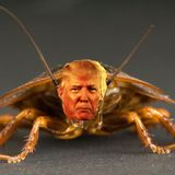 Hello, Orkin? I Need An Orange Pest Exterminated At 1600 Pennsylvania Ave NW