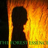 The Forest Essence