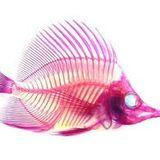 Dazzle Fish