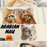 ArabianMau ep.2