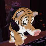 DJ Cat Mix 20151211 at Beautiful Moment