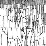 Lines Mixtape