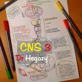 CNS 3 - Dr Hegazy [histology]