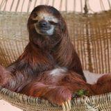 Tomai - Chilling like a Sloth