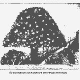 2018-10-21 Een preek over twee bomen door Tom Torbeyns