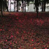 Frankfurt/Tokyo Spring Mix 2014