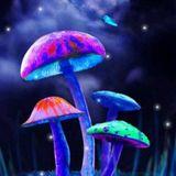 Dream About Mushroom