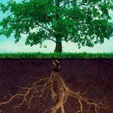 Roots ReVolutioN !