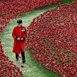 Stephen T's Sunday Soul Soup Show ~ 9th November 2014 'Remembrance Sunday Special'