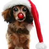 SPACE DOGS RADiO #miXtape 016 - 12 DAYS OF CHRiSTMAS
