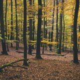 daniel_skyver-grotesque_essentials_autumn_2016_edition_(continuous_mix_1)