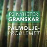 Palmoljeproblemet - P3 Nyheter Granskar