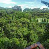 SOASTRACKLOKA #16 - Nadejda @ Deep da Floresta PVT (220417)