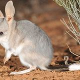 60 jobs slashed from division that protects threatened species