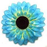 25-05-2020 The Blue Sunflower Show