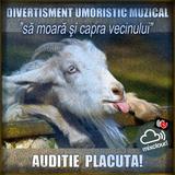 """""""Să moară şi capra vecinului""""  divertisment umoristico muzical..."""
