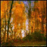 Autumnal - ST 2015.10.11