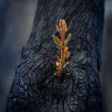 Roel Funcken - Australian Bushfire Sampler Mix