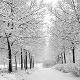 Alex Favell - Winter Warm Up Classics 3
