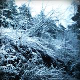Snow Memory