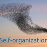 Will self-organisation lead us the way?