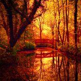 Dubdecker - Forest Pond