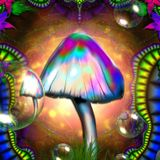 Buba - Magic Psy Shrooms