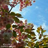 Mystic Trip - May Mix (2013) Calibre Special