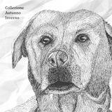 Coughy - Collezione Autunno Inverno | mixtape for A1