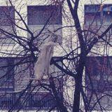 Der Schue - the beauty of the plastic bag pt. 1 / 20.01.13