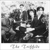 The Triffids - by Babis Argyriou