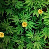 NST - Thấy Hoa Vàng Ở Trên Cỏ Xanh <3