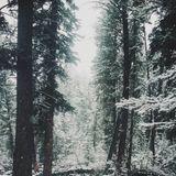 winter'13