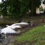 Canal stream