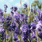 MiraculuM - Simple Pleasures 2013 July