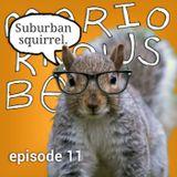 Episode 11 - Suburban Squirrels