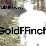 Pulse Loves... GoldFFinch