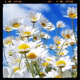 BamaLoveSoul presents Spring